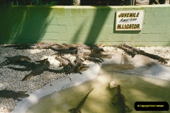 1991-07-21 Gator Jungle, Plant City, Florida.  (15)092