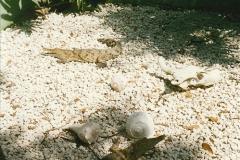1991-07-21 Gator Jungle, Plant City, Florida.  (18)095