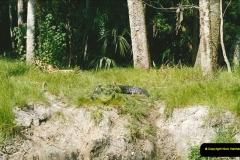 1991-07-21 Gator Jungle, Plant City, Florida.  (3)080