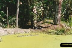 1991-07-21 Gator Jungle, Plant City, Florida.  (4)081