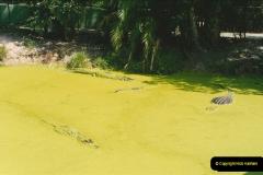 1991-07-21 Gator Jungle, Plant City, Florida.  (5)082