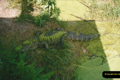 1991-07-21 Gator Jungle, Plant City, Florida.  (9)086