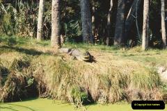 1991-11-24 Gator Jungle, Plant City, Florida.  (10)149