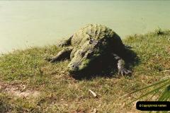 1991-11-24 Gator Jungle, Plant City, Florida.  (15)154