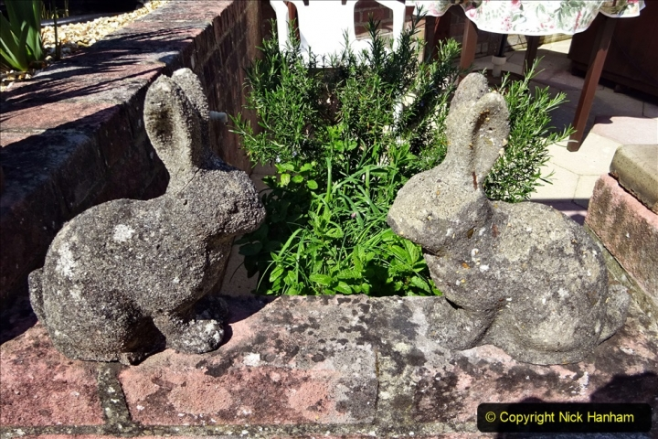2020-05-09 Your Host's Back & Front Garden. (19) 019