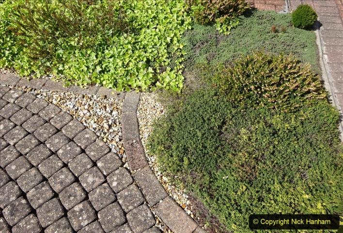 2020-05-09 Your Host's Back & Front Garden. (59) 059