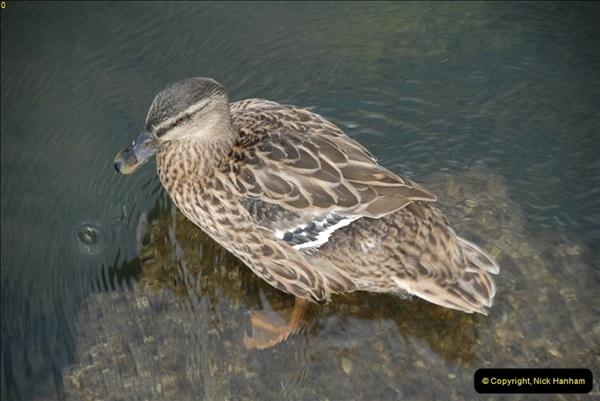 2012-08-18 Hambleden Lock, River Thames, Berkshire.  (47)47