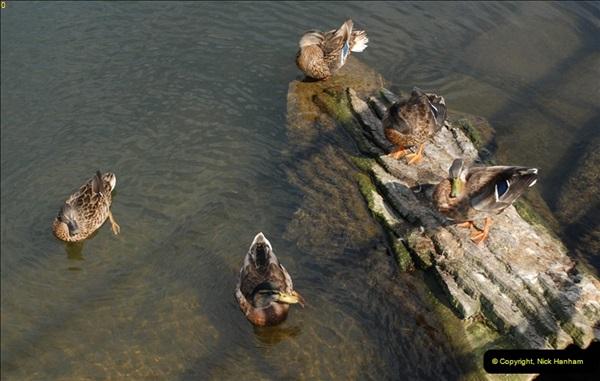 2012-08-18 Hambleden Lock, River Thames, Berkshire.  (55)55