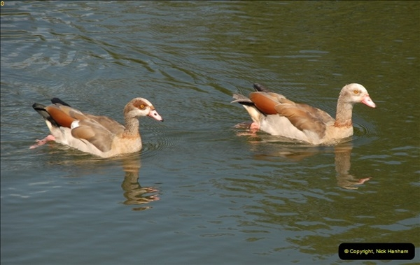 2012-08-18 Hambleden Lock, River Thames, Berkshire.  (13)13