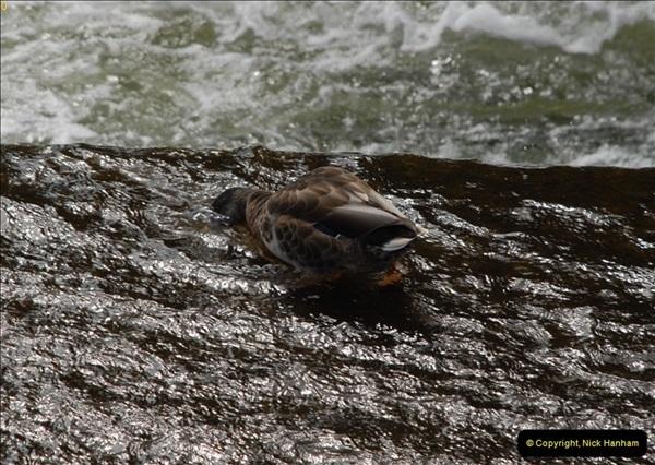 2012-08-18 Hambleden Lock, River Thames, Berkshire.  (46)46