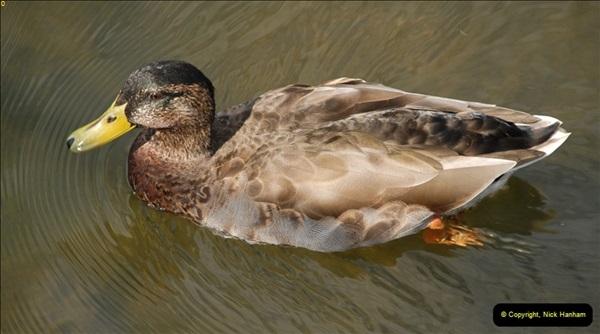 2012-08-18 Hambleden Lock, River Thames, Berkshire.  (53)53