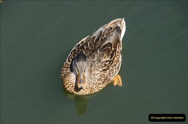 2012-08-18 Hambleden Lock, River Thames, Berkshire.  (9)09