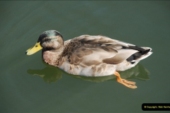 2012-08-18 Hambleden Lock, River Thames, Berkshire.  (10)10