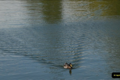 2012-08-18 Hambleden Lock, River Thames, Berkshire.  (11)11