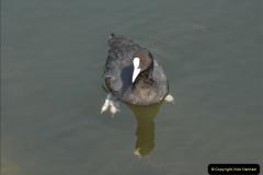 2012-08-18 Hambleden Lock, River Thames, Berkshire.  (16)16