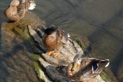 2012-08-18 Hambleden Lock, River Thames, Berkshire.  (54)54