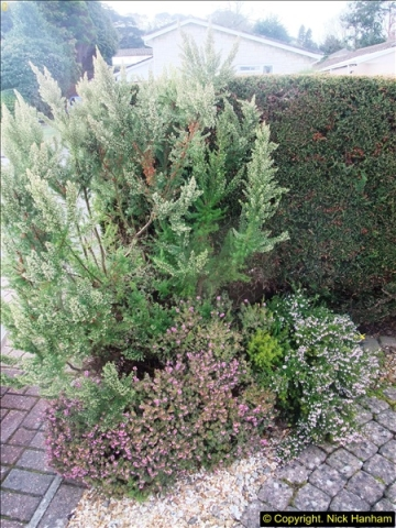 2015-03-08 Back & Front garden before changes.  (19)076