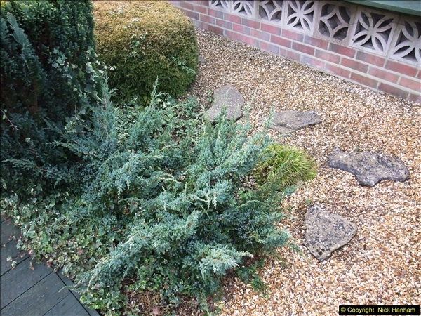 2015-03-08 Back & Front garden before changes.  (8)065