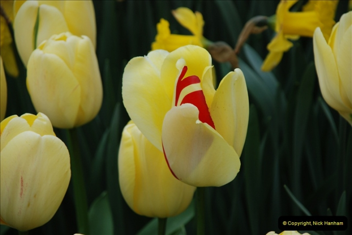 2012-04-26 Keukenhof Gardens.  (19)19