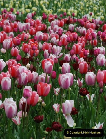 2012-04-26 Keukenhof Gardens.  (27)27