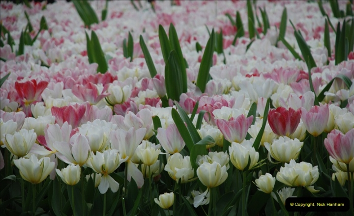 2012-04-26 Keukenhof Gardens.  (35)35