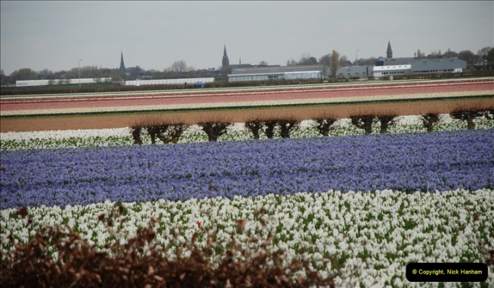 2012-04-26 Keukenhof Gardens.  (49)49