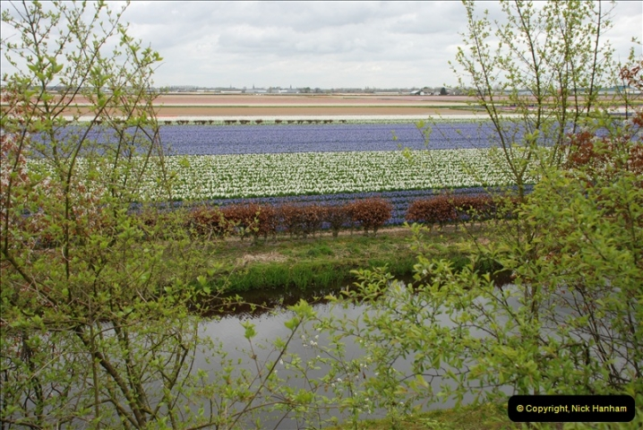 2012-04-26 Keukenhof Gardens.  (53)53