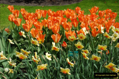 2012-04-26 Keukenhof Gardens.  (110)110