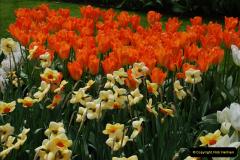2012-04-26 Keukenhof Gardens.  (113)113