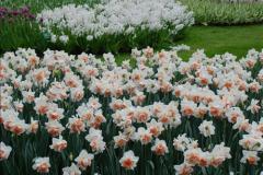 2012-04-26 Keukenhof Gardens.  (114)114