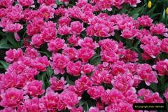 2012-04-26 Keukenhof Gardens.  (115)115