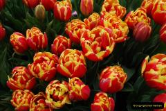 2012-04-26 Keukenhof Gardens.  (123)123