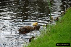 2012-04-26 Keukenhof Gardens.  (128)128