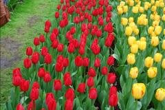 2012-04-26 Keukenhof Gardens.  (134)134