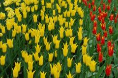 2012-04-26 Keukenhof Gardens.  (135)135