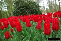 2012-04-26 Keukenhof Gardens.  (139)139