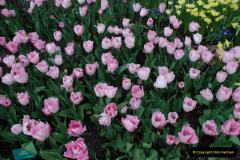 2012-04-26 Keukenhof Gardens.  (14)14