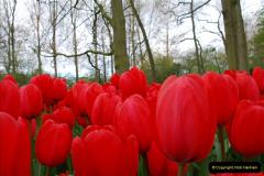 2012-04-26 Keukenhof Gardens.  (144)144