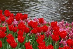 2012-04-26 Keukenhof Gardens.  (151)151