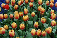2012-04-26 Keukenhof Gardens.  (15)15