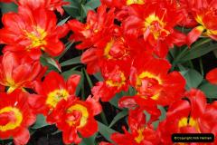 2012-04-26 Keukenhof Gardens.  (16)16
