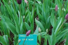 2012-04-26 Keukenhof Gardens.  (168)168