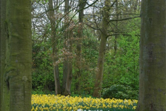 2012-04-26 Keukenhof Gardens.  (169)169