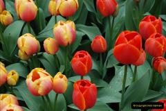 2012-04-26 Keukenhof Gardens.  (17)17