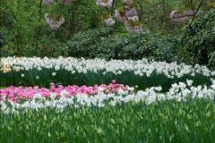 2012-04-26 Keukenhof Gardens.  (173)173