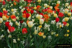 2012-04-26 Keukenhof Gardens.  (179)179