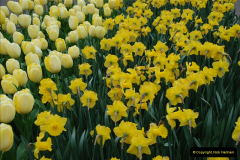 2012-04-26 Keukenhof Gardens.  (18)18