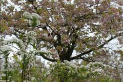 2012-04-26 Keukenhof Gardens.  (183)183