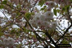 2012-04-26 Keukenhof Gardens.  (184)184