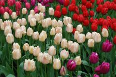 2012-04-26 Keukenhof Gardens.  (185)185